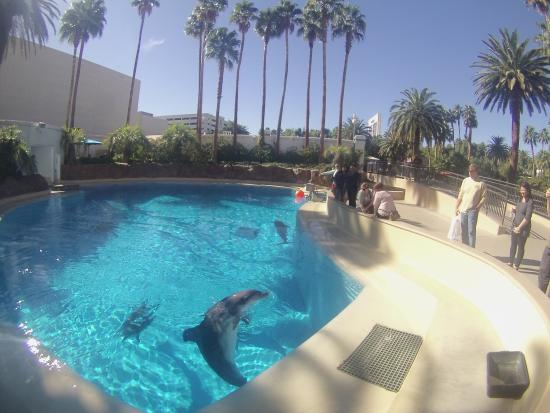 Lions Picture Of Siegfried Roy 39 S Secret Garden And Dolphin Habitat Las Vegas Tripadvisor