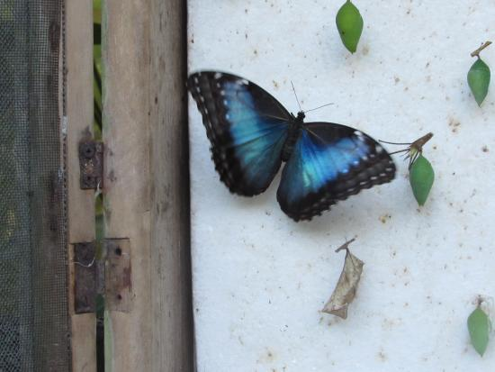 Hotel Mariposario Montezuma Gardens: Butterfly Emerges in the Garden