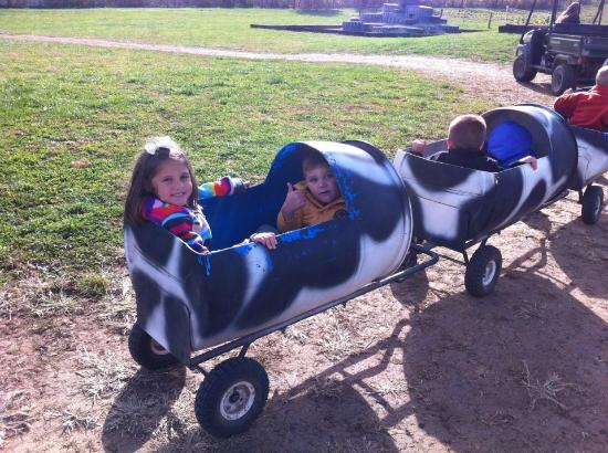 Devine's Corn Maze & Pumpkin Patch: Cow Train