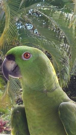 Lodge Ylang Ylang: Le perroquet un petit curieux