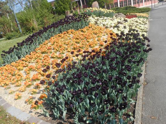 Bibliothèque Humaniste : As tulipas desta cidade. Primavera!!!
