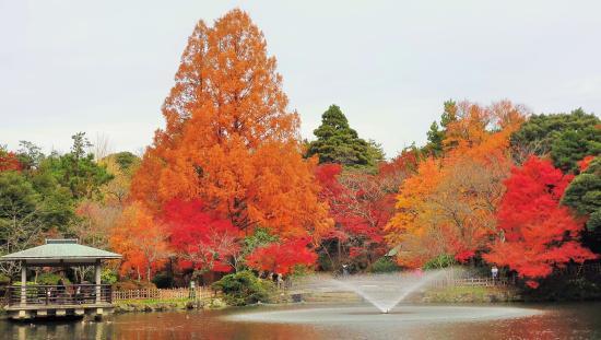 Takaoka Castle Remains: 紅葉1