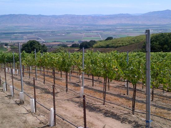 Paraiso Vineyards by Smith Family Wines: beautiful views of the Vineyards
