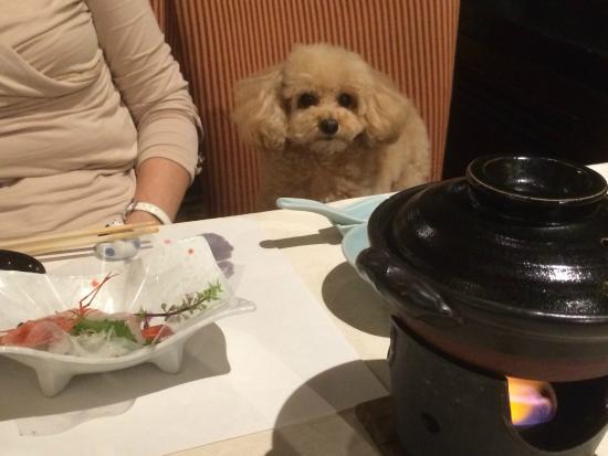 Takayama Wan Wan Paradise: レストランは愛犬も同席