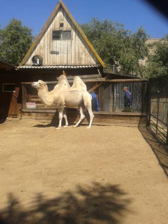 Chita City Zoo