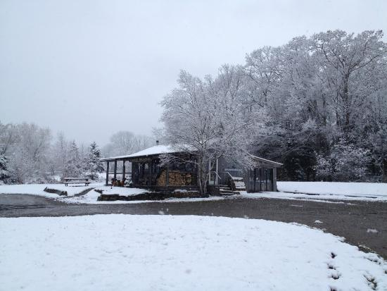 Lincolnville, ME: Green Tree Coffee and Tea under the first snow of 2014!