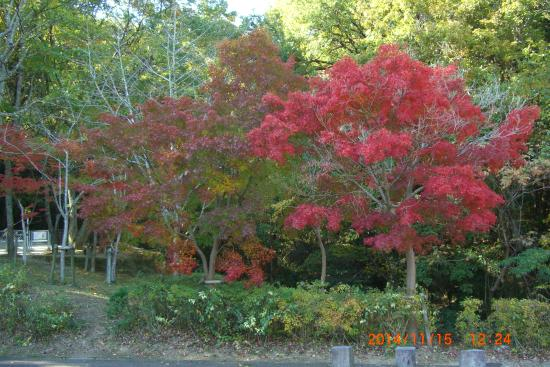 二上山ふるさと公園, 紅葉