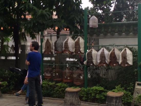 Yuanpu Street Bird Park : yuan po bird garden