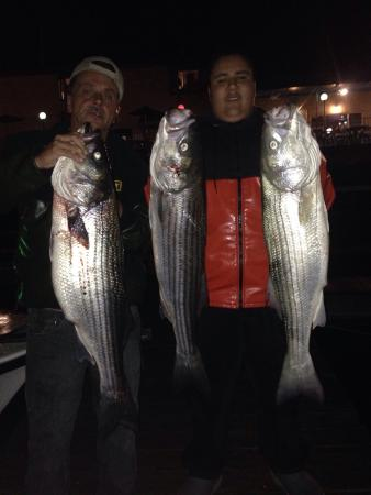 Sound bound fishing charters new rochelle ny hours for Sound bound fishing