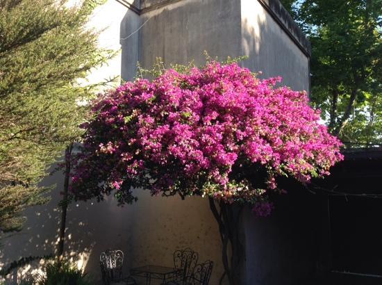 Hotel posada Manuel de lobo: atardecer en el patio