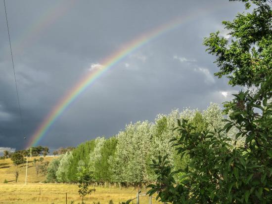 Glenhope Alpacas B&B Accommodation Armidale: The beautiful scenery on the property