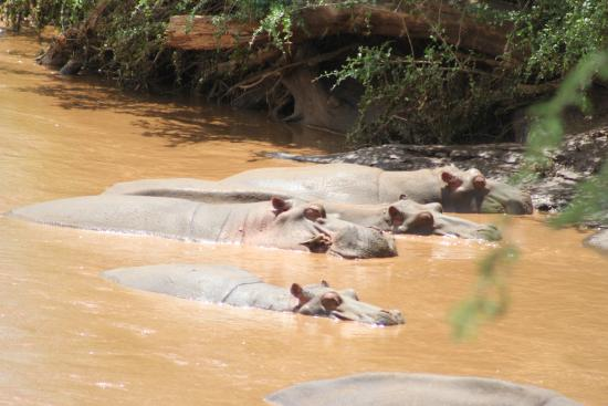 Steve & Richard Day Tours & Safaris: Tsavo West