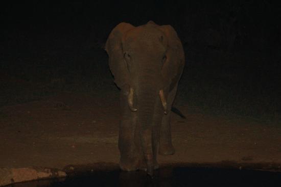 Steve & Richard Day Tours & Safaris: afari Lodge guest!