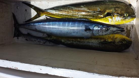 Legacy Fishing Charters : The days catch