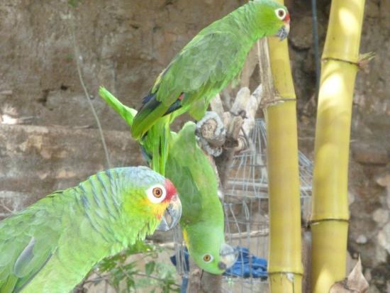 La Floresta Hostel: The Funny Parrots