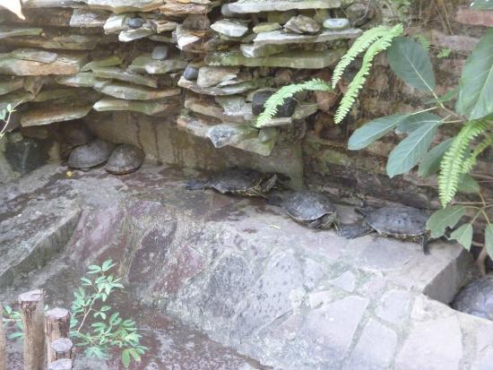 La Floresta Hostel: The turtles