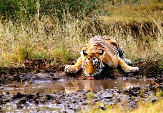 Ranthambore National Park : Zone 6