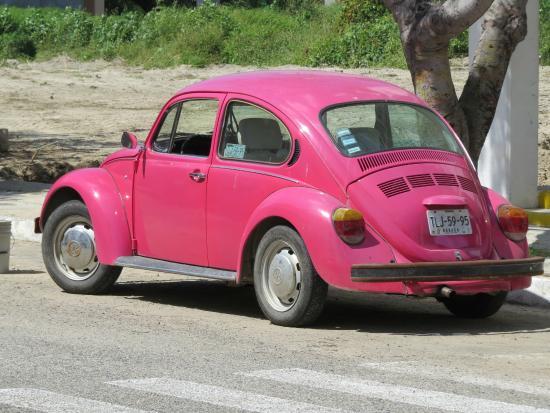 Santa Cruz Bay: Bug