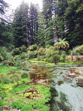 Hamurana Springs: Crystal clear water