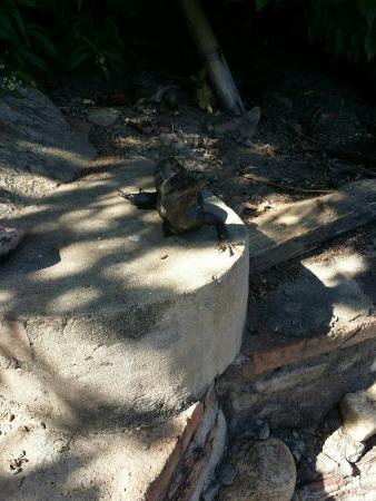 El Jardin Yelapa: Stumpy! He said cheese!