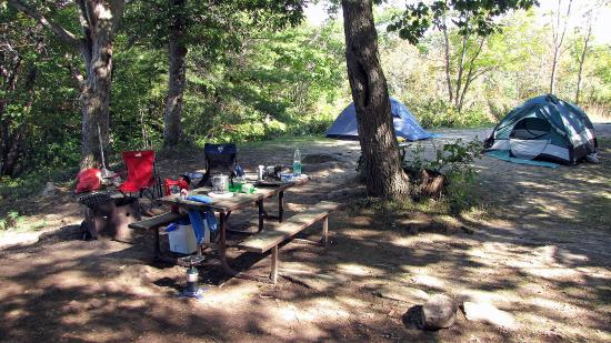 Mushroom - Picture of Six Mile Lake Provincial Park, Port ...