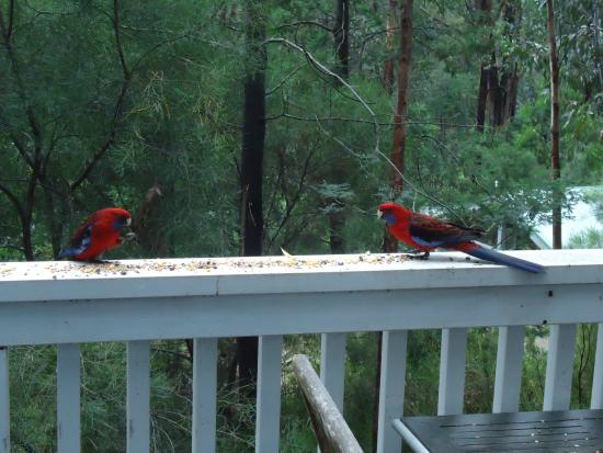 Silvertop Cottages: The birds