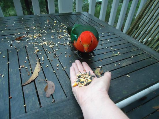 Silvertop Cottages: Bird feeding on the balcony