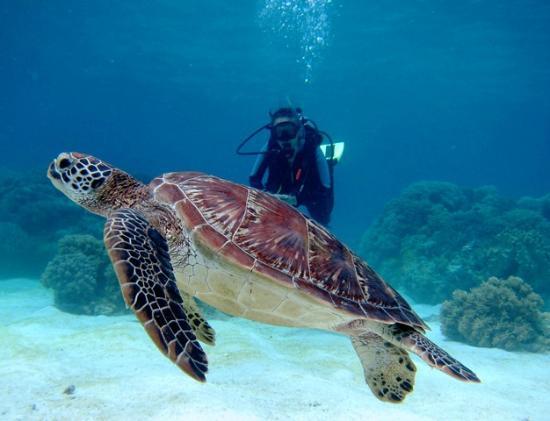 Alcoy, ฟิลิปปินส์: Turtle
