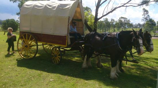 Hunter Valley Classic Carriages : The chariot awaiting departure with 'storm' covers down in case the rain came in too soon.