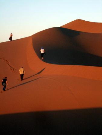 Sahara Holidays Day Tours