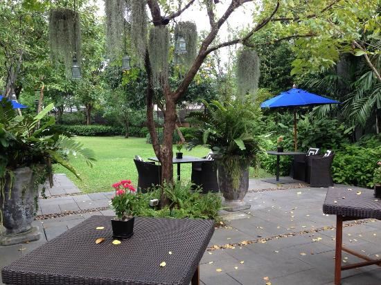 Backyard Cafe สวนภายในร้าน - picture of 99 rest backyard cafe, bangkok - tripadvisor