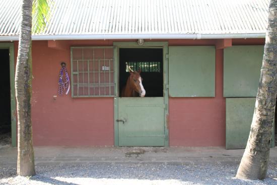 La Vieille Cheminee: stalle