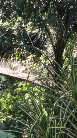 Lodge Ylang Ylang: Le pont suspendu