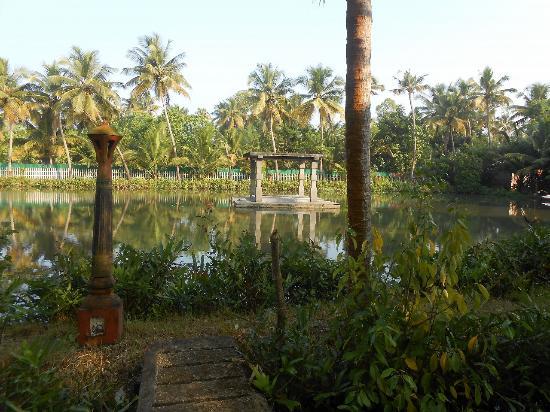 Shravanam Greens : garden