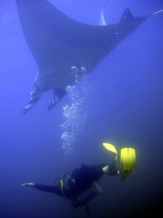 BA Divers: Diving