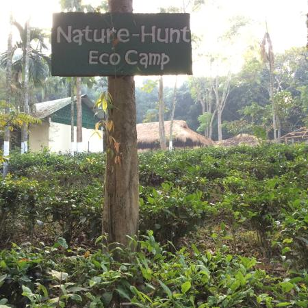 Nature Hunt Eco Camp, Kaziranga National Park: Eco-camp with tea plantations