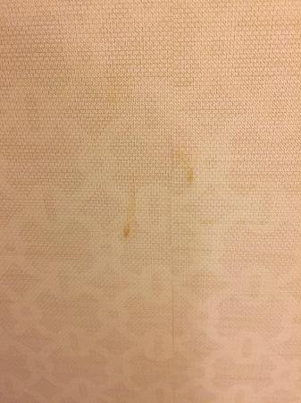 Hilton Dallas Park Cities: Poop stains on the wall in the bathroom.