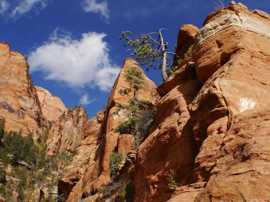 Red Ledge RV Park & Campground : Red Ledge is 20min drive to Kolob Visitor Centre and a number of trailheads.