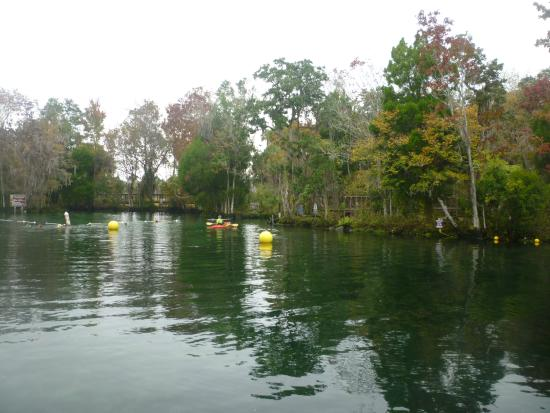 Sunshine River Tours - Crystal River Manatee Tours: Day Out on the crystal river