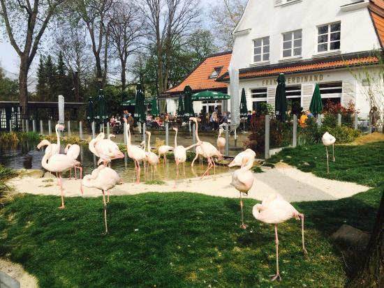 . Flamingos im Garten      Picture of Franz Ferdinand  Bochum