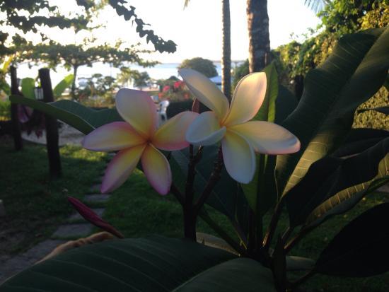 Halai Pousada e Restaurante : La poesia dei fiori