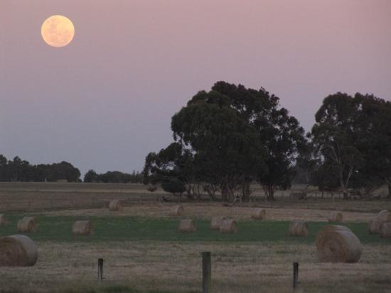 Taunton Farm Holiday Park : view from camping area on full moon.