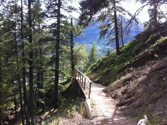 Jasper Discovery Trail: Discovery Trail