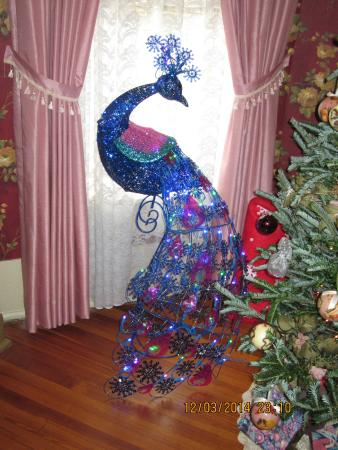 Benefield House Bed & Breakfast: A Christmas lighted peacock