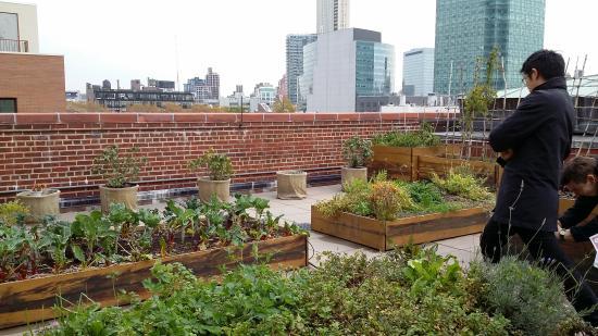 MoMA PS1: la terraza