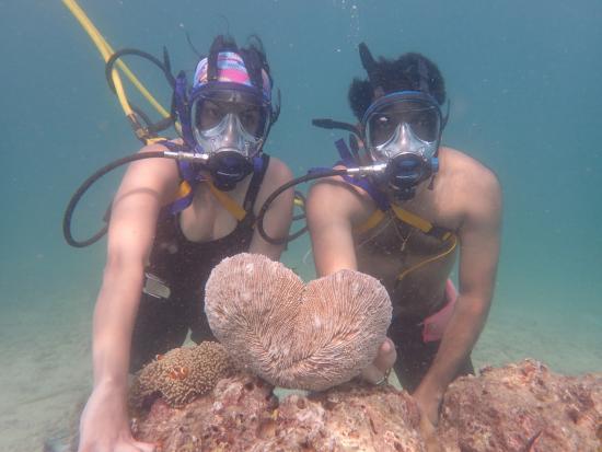 Coral Island: Sasuba