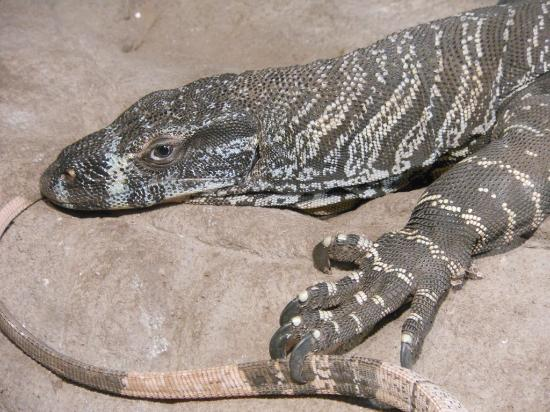 Canberra Reptile Zoo: Lazing around
