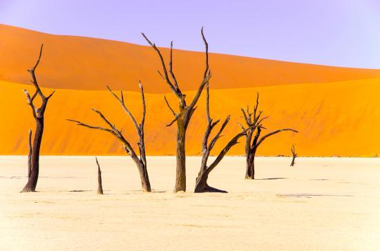 Sossusvlei Lodge: Dead trees at Dead Vlei in the Namib Desert