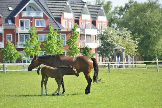 Strandhafer Aparthotel: Pferdekoppeln am Hotel