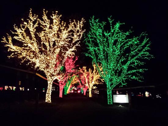 Beautiful trees at Holiday Lights on the Lake - Picture of Lakemont ...